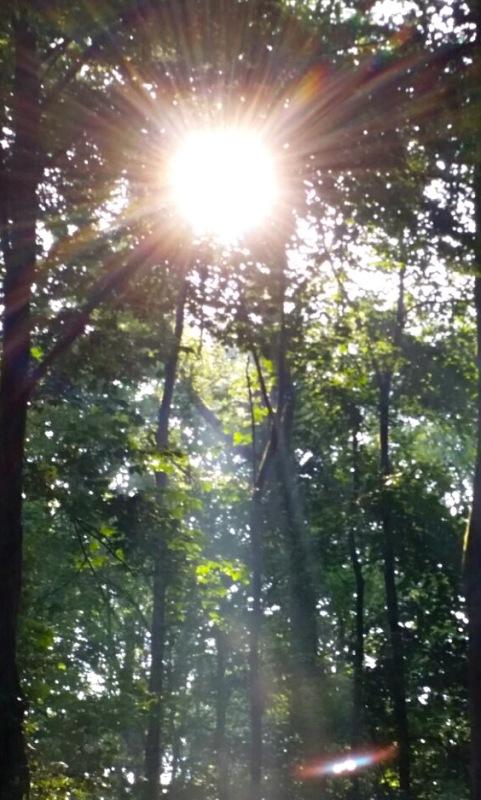Heilige Gral - bild im Wald